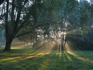 Rembrantpark